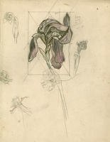 Artist John Nash: Study of an iris