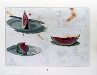 Artist Winifred Knights: Study of watermelons for The Marriage at Cana