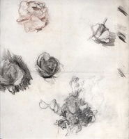 Sheet of flower studies