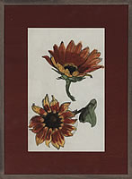 Study of two sunflowers